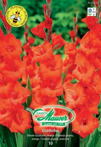 Gladiolen orange