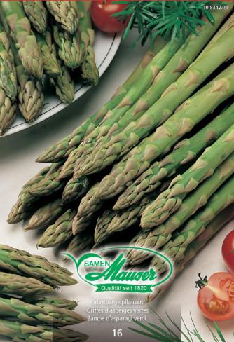 Grünspargel-Pflanzen