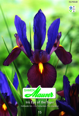 Iris Black Beauty, Iris hollandica, 15 Knollen.