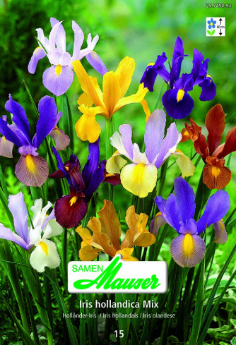 Iris Beauty Mischung, Iris hollandica, 15 Knollen