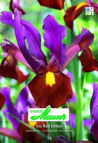 Iris Red Ember, Iris hollandica, 15 Knollen