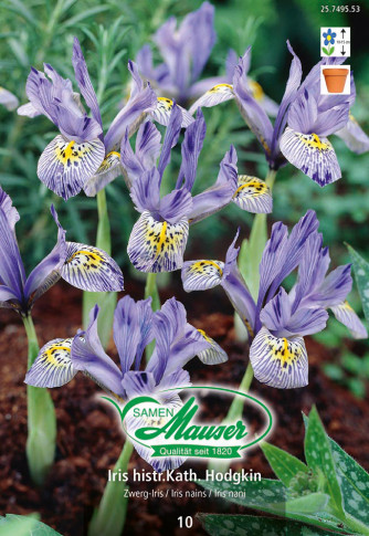 histrioides Katharina Hodgkin, Orchideen-Iris, 10 Knollen
