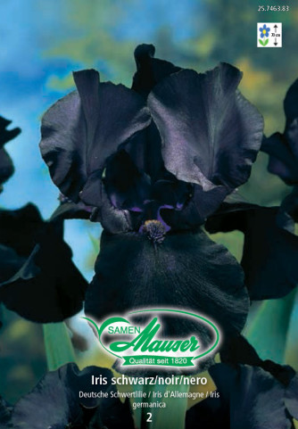 Iris germanica schwarz