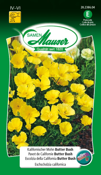 Kalifornischer Mohn Butter Bush