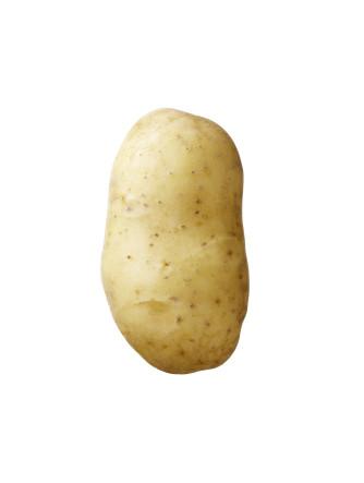Semenceaux de pommes de terre 'Concordia' 1 kg