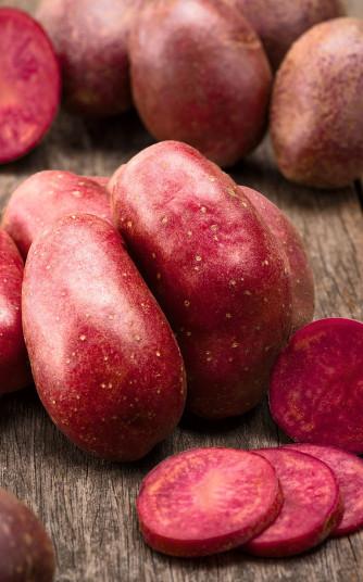 Saatkartoffel 'Red Emmalie' 1 kg