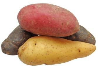 Pommes de terre Tricolore