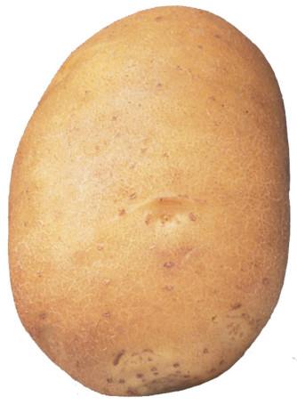Saatkartoffel 'Agata' 2,5 kg