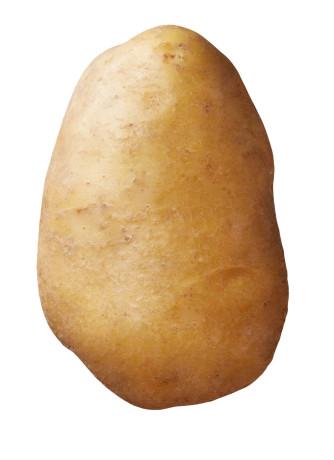 Saatkartoffel 'Agria' 2,5 kg