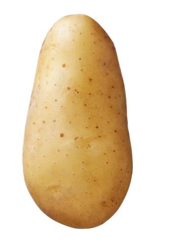 Saatkartoffel 'Annabelle' 2,5 kg