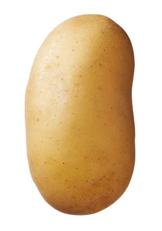 Saatkartoffel 'Charlotte' 2,5 kg