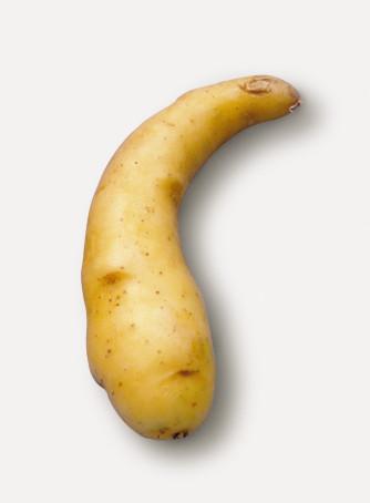Semenceaux de pommes de terre 'Ratte' / 'Virgule' 1 kg