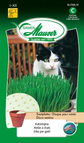 Herbe à chats Disque pour semis