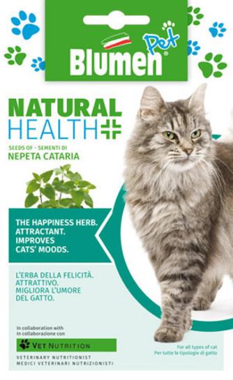 Katzenminze (Nepeta cataria)