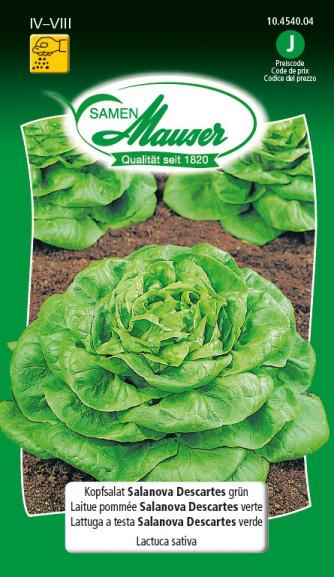 Kopfsalat Salanova Descarte grün