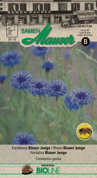 Kornblume Blauer Junge