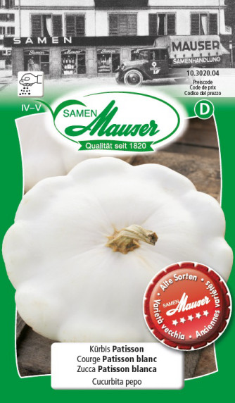 Courge Patisson blanc