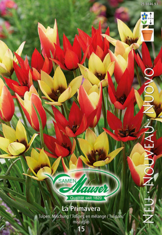 La Primavera - Tulpenmischung