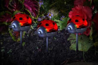 Ladybird Stake