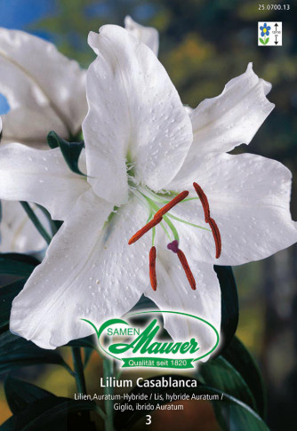 Lilien Casablanca, Lilium auratum Hybriden, 3 Zwiebeln