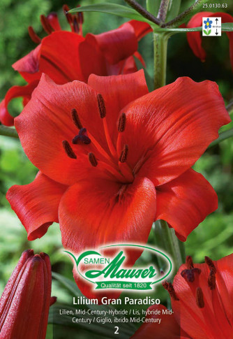 Lilien Grand Paradiso