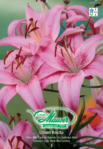 Lilien Rosita, Lilium Mid-Century-Hybriden, 3 Zwiebeln
