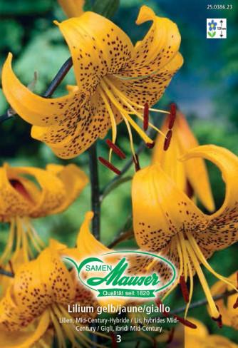 Lilien Gelb, Lilium Mid-Century-Hybriden, 3 Zwiebeln