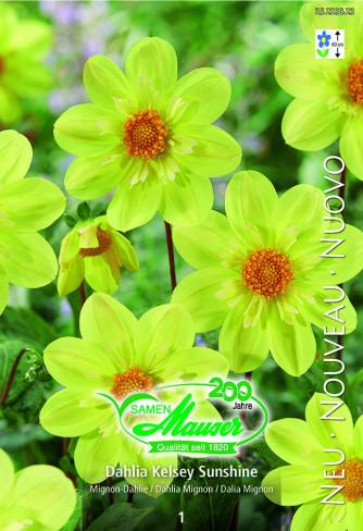 Mignon-Dahlie Kelsey Sunshine