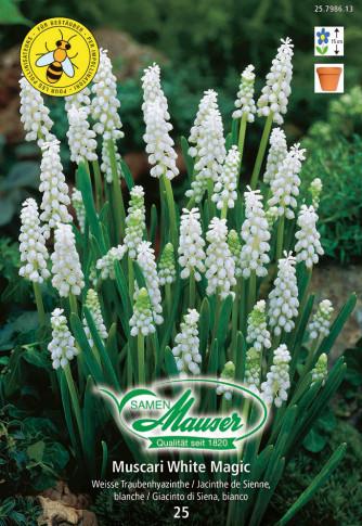 Muscari White Magic, Traubenhyazinthe, 25 Zwiebeln
