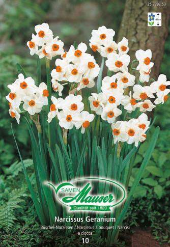 Geranium, Bouquet-Narzisse, 10 Zwiebeln