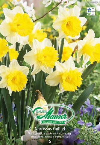 Goblet, Narcisse trompette, 5 bulbes