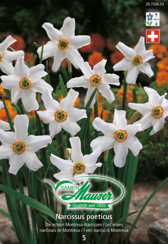 Echte Montreux-Narcisse, Kleinkronige Narzisse, 5 Zwiebeln