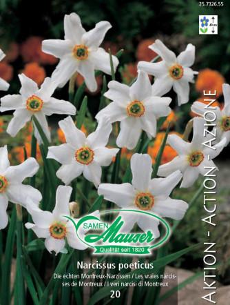 Echte Montreux-Narcisse, 25 Zwiebeln