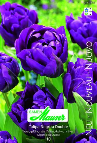 Negrita Double, Späte, gefüllte Tulpe, 10 Zwiebeln