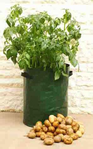 Kartoffel-Pflanzgefäss