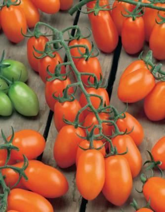 Pflaumen-Cherrytomate 'Mirado Orange'
