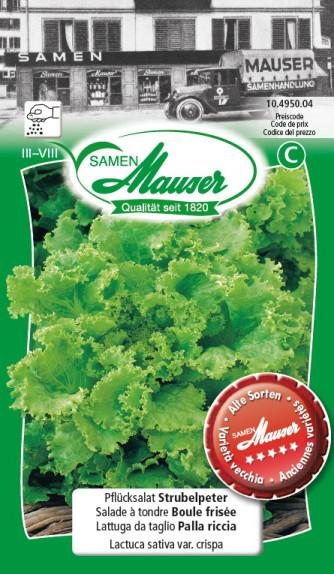 Salade à tondre Boule frisée