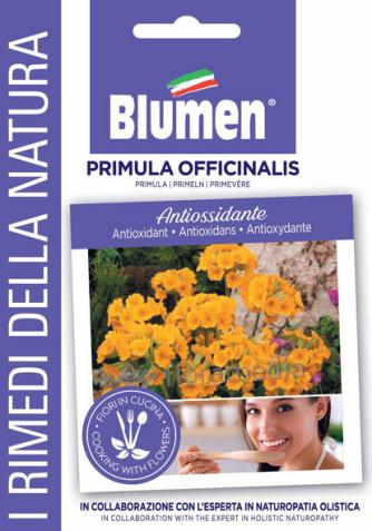 Primel (Primula officinalis)