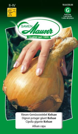 Riesen-Gemüsezwiebel Kelsae