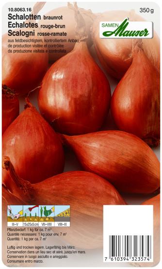 Schalotte braunrot