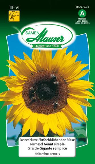Sonnenblume einfachblühender Riese