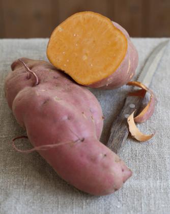 Süsskartoffel 'Erato Orange'®