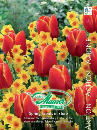 Spring Scents - Mischung Tulpen und Narzissen