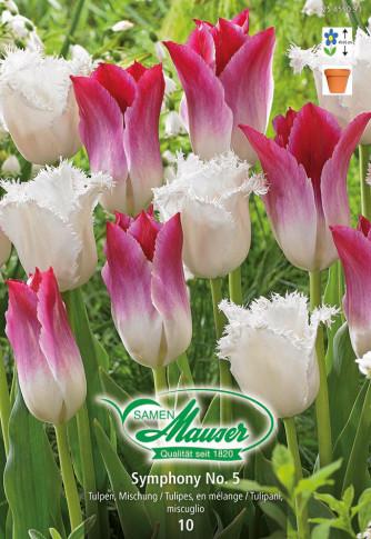 Symphony No. 5 - Tulpenmischung