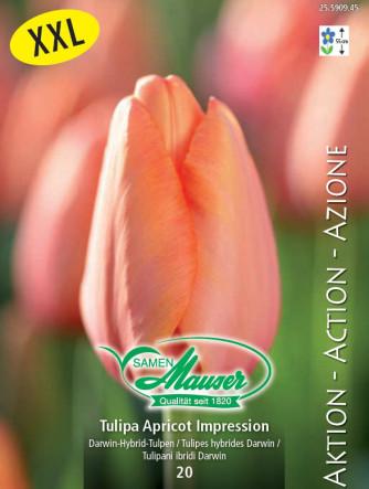 Tulpe Apricot Impression, Aktion, 25 Zwiebeln