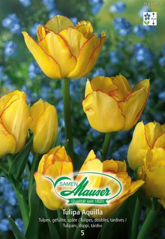Aquilla, Späte, gefüllte Tulpe, 5 Zwiebeln