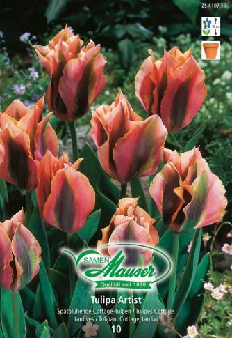 Artist, Viridiflora-Tulpen, 10 Zwiebeln