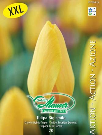 Tulpe Big Smile, Aktion, 25 Zwiebeln