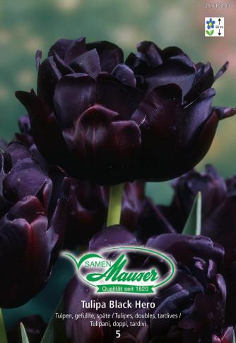 Black Hero, Späte, gefüllte Tulpe, 5 Zwiebeln