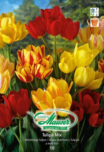 Bouquet-Tulpen Mischung